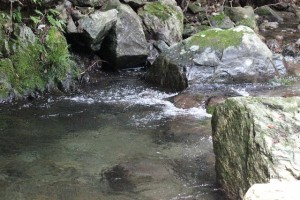 小川のイメージ画像
