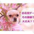 お花見NGファッションイメージ画像